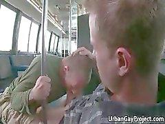 Les mecs obtiennent repris par un bus et obtenir