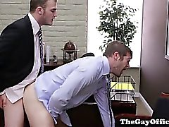 Homosexuell großes Stück Büro Wesen Esel schlug
