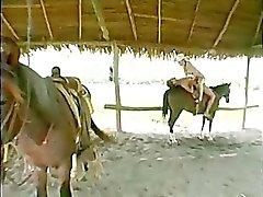 Goza de un paseo a caballo mientras que apasionada del sexo !