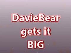 DavieBear zu nehmen GROSSEN