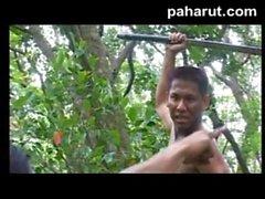 Hot Thai Porn