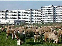 Wurde Manner Nicht Pelz Lieferung möglich Halten (1971)