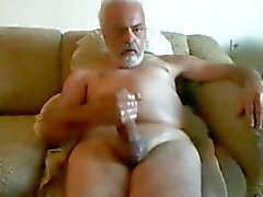 Gallo gran papá