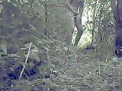 aftrekken Е. Н. spuiten в от bosjes